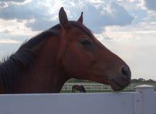 смотреть лошадей камеры стоковая фотография
