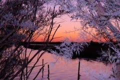 Смотреть между заходом солнца деревьев на воде стоковое изображение rf