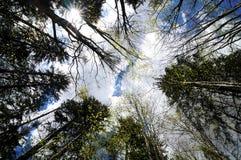 смотреть небо к вверх Стоковые Фото