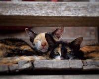 Смотреть домашнего животного кота Стоковое фото RF
