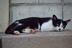 Смотреть домашнего животного кота Стоковое Изображение