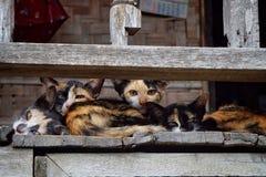 Смотреть домашнего животного кота Стоковое Изображение RF