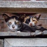 Смотреть домашнего животного кота Стоковая Фотография