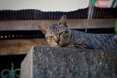 Смотреть домашнего животного кота Стоковые Фото