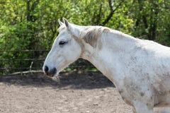 смотреть лошадей камеры Стоковые Фото