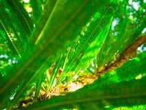 Смотреть до зеленый цвет Стоковое фото RF