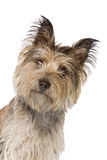 смотреть собаки камеры смешной Стоковые Фото
