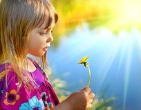 смотреть цветка одуванчика Стоковая Фотография RF