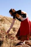 смотреть цветков Стоковое Фото