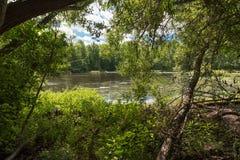 Смотреть через деревья Стоковые Изображения RF