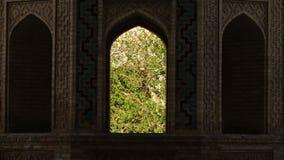 Смотреть через окно на деревьях видеоматериал