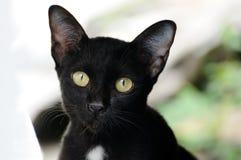 Смотреть черного кота портрета внешний к камере стоковое фото
