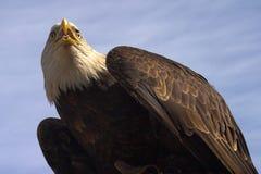 смотреть prey Стоковые Фото