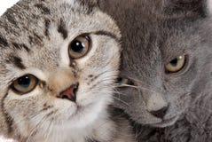 смотрит на котенка Стоковые Фотографии RF
