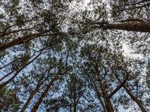 Смотрящ до лес - зеленый конспект природы ветвей дерева, дерево Стоковые Фотографии RF
