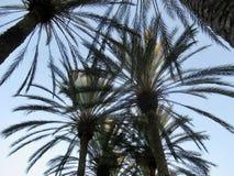 смотрящ пальмы вверх Стоковые Изображения