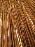 смотрящ через тростники, летние каникулы стоковое изображение