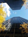 2 смотря на небоскреба, взгляд угла, желтые деревья, центр города NYC стоковая фотография rf