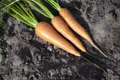 смолотые моркови Стоковая Фотография RF