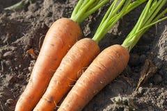 смолотые моркови Стоковые Фотографии RF