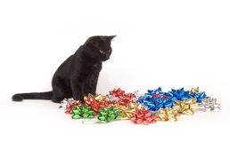 Смычки черного кота и рождества стоковая фотография
