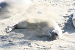 См. слона pelted с песком Стоковые Изображения