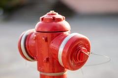 Снаружи красного гидранта стоящее в парке система Анти--огня в th Стоковое Изображение RF