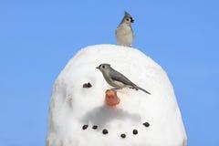 снеговик птиц Стоковые Изображения