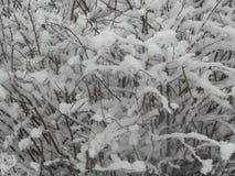 Снег Буш Стоковые Изображения