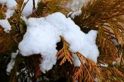 Снег Буш Стоковое Изображение
