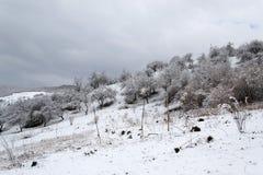 Снег весны Стоковые Фотографии RF