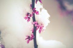 Снег весны Стоковые Изображения RF