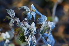 Снег ветви ели Стоковое Изображение RF