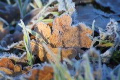 Снег ветви ели Стоковые Изображения RF