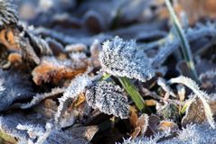 Снег ветви ели Стоковое фото RF