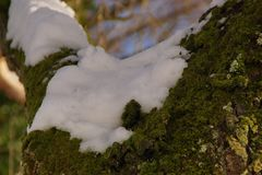 Снег, ветви и солнце - ландшафты зимние - конец-вверх Стоковые Изображения
