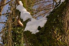 Снег, ветви и солнце - ландшафты зимние Стоковые Изображения