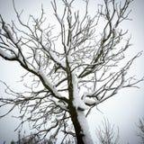 Снег вставленный к дереву стоковое изображение