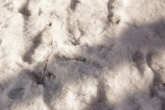 Снег в конце-вверх Стоковое Изображение RF
