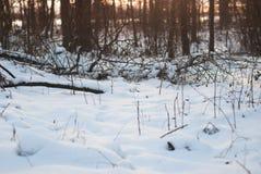 Снег в красиво освещенных древесинах, Стоковые Фотографии RF