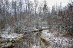 Снег в ноябре стоковая фотография