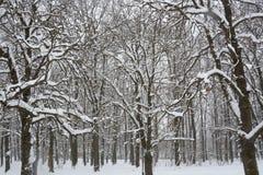 Снег в парке в Софии, Болгарии 29-ое декабря 2014 Стоковое Изображение RF