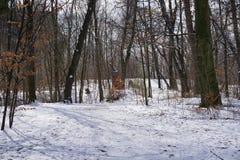 Снег в парке в Германии в зиме Стоковая Фотография