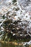 Снег в природе зимы леса стоковое изображение