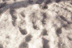 Снег в солнце - благоустраивайте зимнее Стоковые Изображения