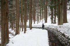 Снег в сосновом лесе Стоковые Фотографии RF