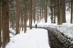 Снег в сосновом лесе Стоковая Фотография