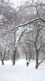 Снег в Central Park Нью-Йорке Стоковые Изображения RF