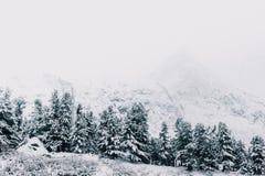 Снег в coniferous лесных деревьях под снегом стоковые фотографии rf