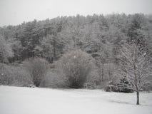 Снег горы Пенсильвании Стоковое Изображение RF
